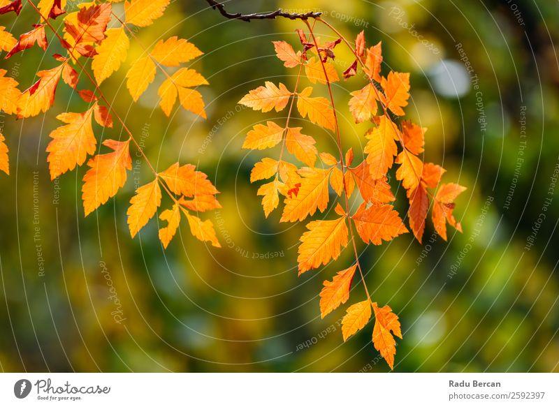 Gelbe und orange Herbstbaumblätter in der Herbstsaison Blatt Baum Hintergrundbild Landschaft Wald