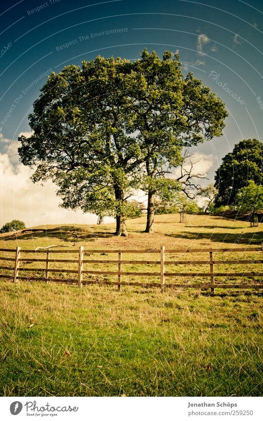 Idylle Umwelt Natur Landschaft Himmel Sommer Baum Gras Garten Park Wiese Hügel ästhetisch blau gelb gold grün Gefühle Zufriedenheit Lebensfreude Erholung