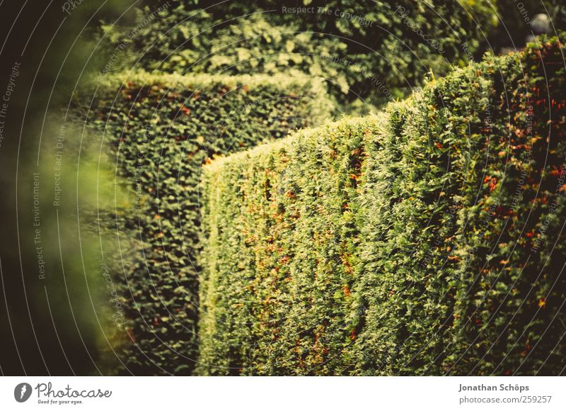 Irrgarten Natur grün Pflanze Sommer Herbst Umwelt Wege & Pfade Garten Park Abenteuer ästhetisch Fröhlichkeit Ecke Sträucher Ziel Lebensfreude