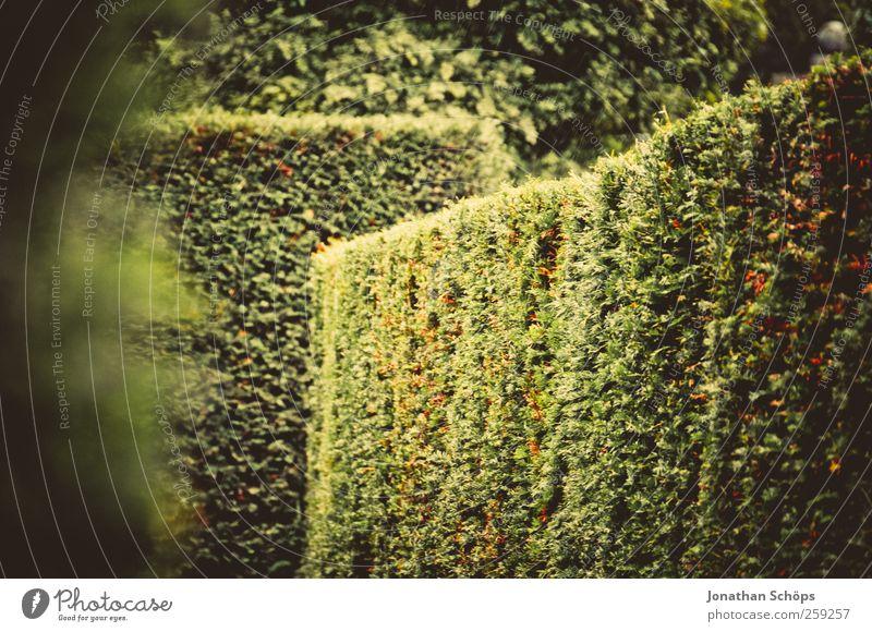 Irrgarten Umwelt Natur Sommer Herbst Pflanze Sträucher Grünpflanze Garten Park ästhetisch grün Fröhlichkeit Lebensfreude Abenteuer Labyrinth Hecke