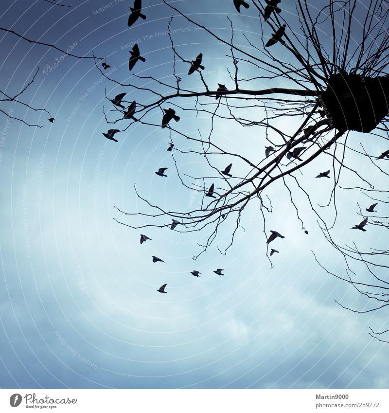 Gedanken sind frei wie Vögel ruhig Ferne Freiheit Tier Vogel Schwarm fliegen Ferien & Urlaub & Reisen träumen Unendlichkeit blau Gefühle Lebensfreude Romantik