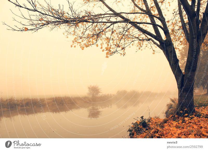 Herbststimmung Landschaft Baum Park Wiese schön orange herbstlich Herbstlaub Herbstfärbung Herbstbeginn Herbstwald Herbstwetter Herbstlandschaft Blatt Laubbaum