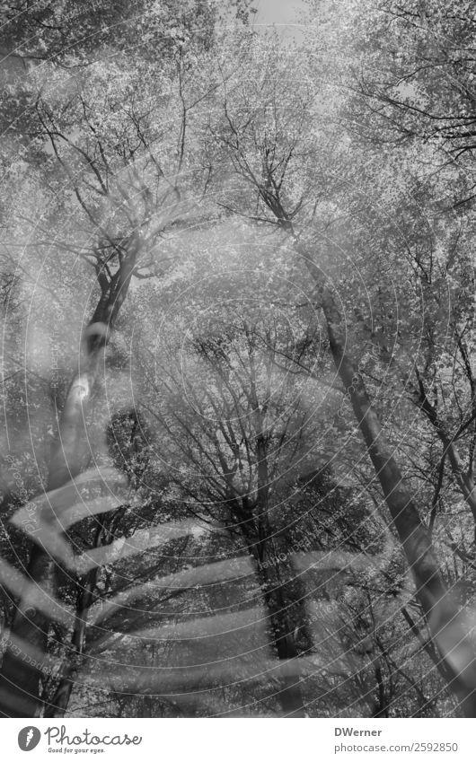 doppel 1 Kind Natur Pflanze schön Baum Erholung Wald Lifestyle Umwelt Junge wandern träumen elegant Lächeln genießen Schönes Wetter