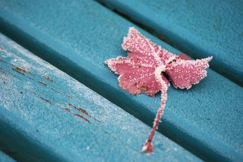 Wintereinbruch am südlichen Ende der Parkbank blau Pflanze Blatt Farbe ruhig Tod kalt Holz Garten Stimmung Zeit Eis rosa Wandel & Veränderung