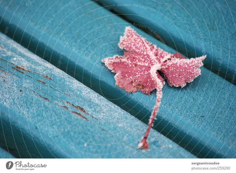 Wintereinbruch am südlichen Ende der Parkbank Pflanze Eis Frost Blatt Garten Holz fallen kalt unten blau rosa ruhig Tod Endzeitstimmung Farbe Idylle stagnierend