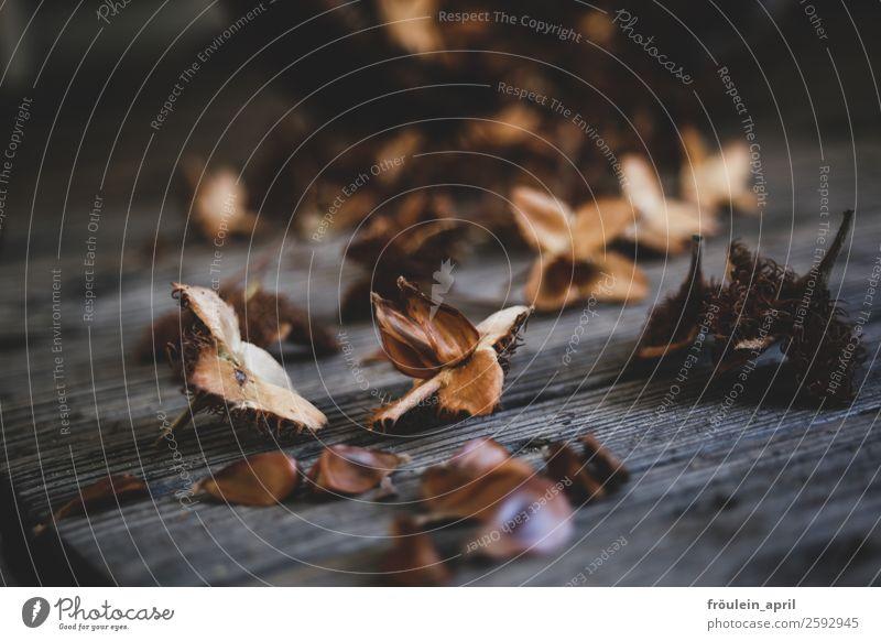 Popeckern Garten Pflanze Herbst Baum Park Wald Holz ästhetisch eckig braun achtsam Stimmung Buchecker Ernte Querformat Farbfoto Low Key Schwache Tiefenschärfe