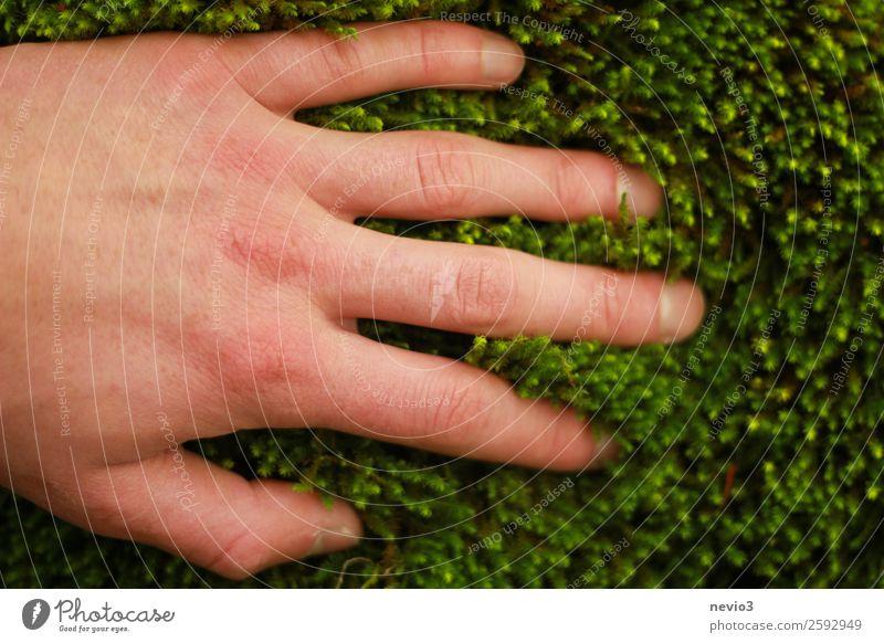 Moosteppich Umwelt Grünpflanze Wildpflanze grün Leidenschaft Schutz Geborgenheit weich zart zartes Grün Hand greifen berühren fahren Natur erleben Gefühle