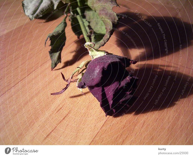 Rose Blume Blüte Parkett rot Schatten