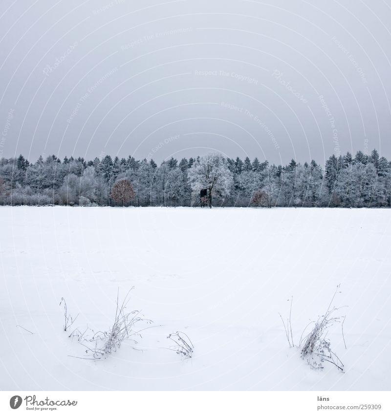 jägerlatein Schnee Pflanze Himmel Winter Baum Gras Feld Wald Hochsitz grau weiß kalt Eis Schneedecke Schneelandschaft Farbfoto Menschenleer Textfreiraum oben