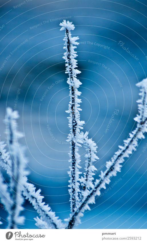 gefrorener Baumzweig im Winter schön Schnee Berge u. Gebirge Wissenschaften Umwelt Natur Pflanze Wasser Erde Himmel Klima Wetter Schneefall Gletscher Fluss