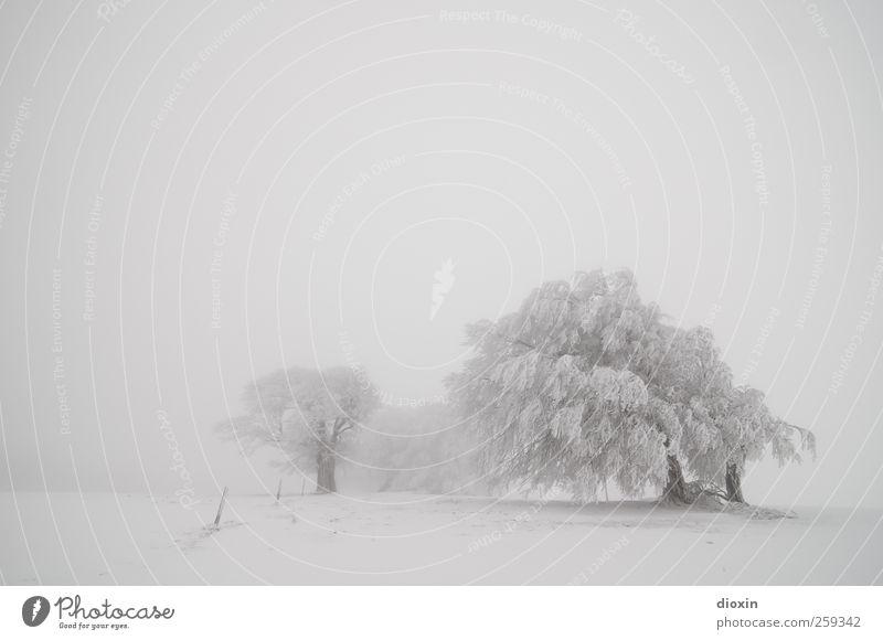 Baumloben | Winterbuchen Pt.3 Natur weiß Baum Pflanze Ferien & Urlaub & Reisen Winter kalt Umwelt Schnee Landschaft Berge u. Gebirge Schneefall Wetter Eis Nebel Ausflug