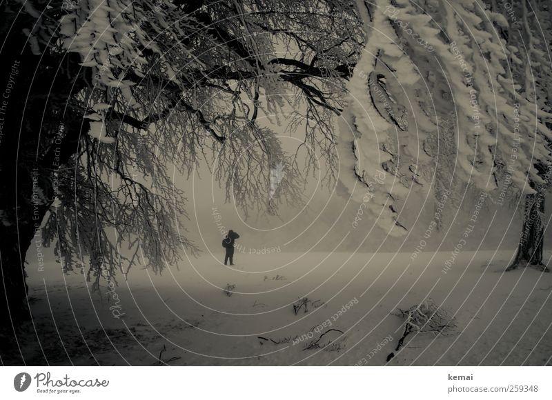 Baumloben | Allein unter Zweigen Mensch Natur weiß Pflanze Winter Einsamkeit Wald kalt Umwelt Schnee Landschaft Eis Frost Ast einzeln