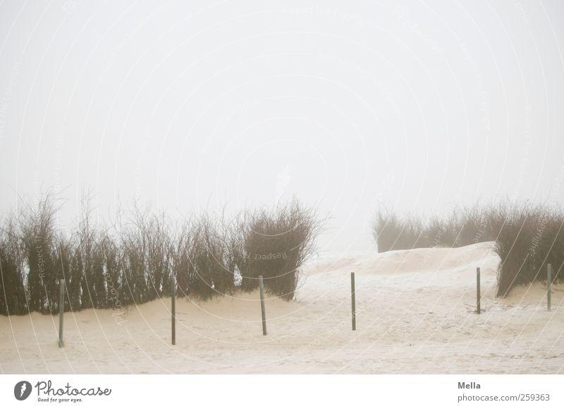 Ausweg Umwelt Natur Landschaft Sand Nebel Pflanze Sträucher Reisig Zweige u. Äste Küste Strand Nordsee Poller Begrenzung Stab Pfosten hell kalt trist Klima