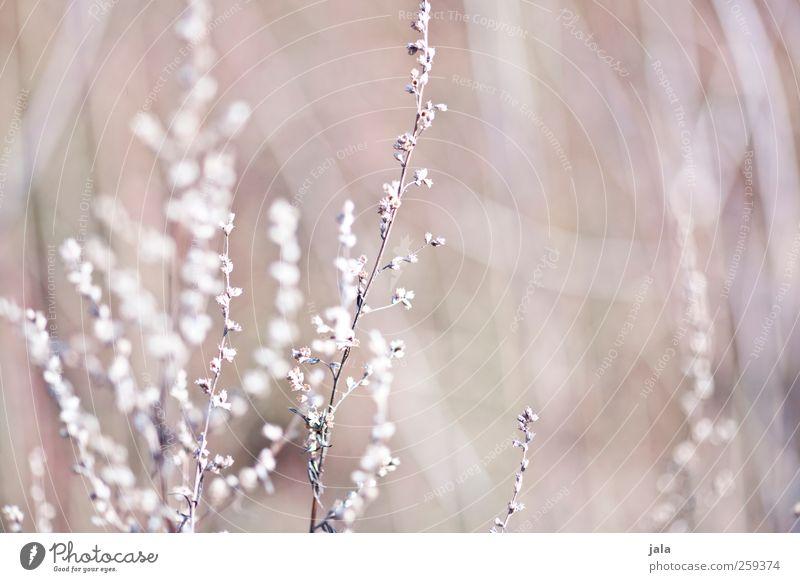 dried flowers Natur Pflanze Blume Umwelt Blüte Frühling natürlich ästhetisch trocken beige Wildpflanze