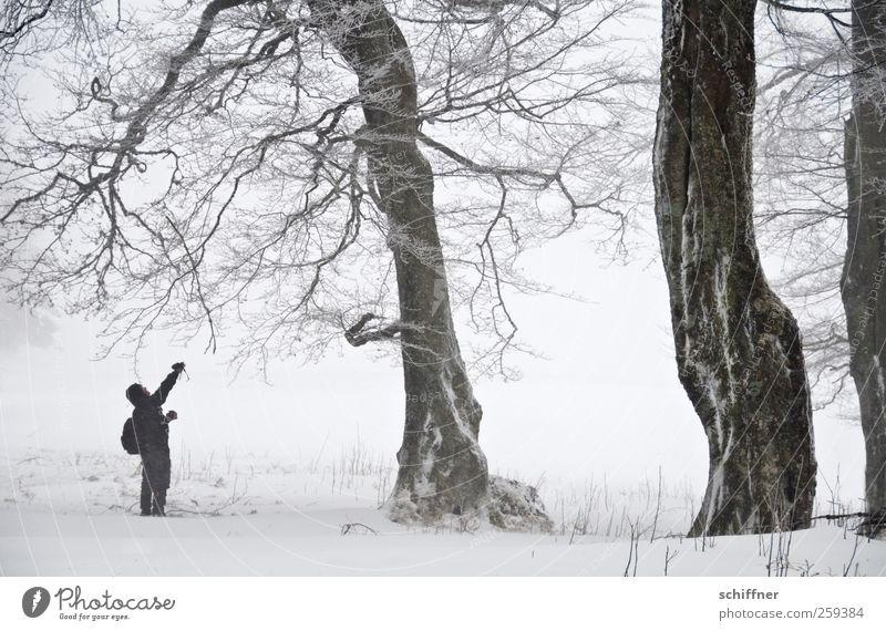 Baumloben | Astzupfer Mann Erwachsene 1 Mensch Natur Landschaft Winter schlechtes Wetter Nebel Eis Frost Schnee Schneefall Pflanze kalt weiß Einsamkeit einzeln