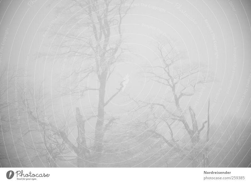 Baumloben | Geisterstunde Natur Pflanze Winter Einsamkeit Wald kalt Eis Nebel Klima trist Frost Urelemente Ende gruselig frieren bizarr