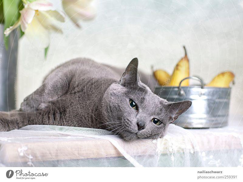 Relax Katze blau schön Pflanze Tier ruhig gelb Erholung Ernährung Lebensmittel Holz grau Blüte Metall Zufriedenheit Frucht