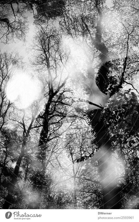doppel 3 Himmel Natur Ferien & Urlaub & Reisen Pflanze Landschaft Baum Wald dunkel Umwelt Traurigkeit Freiheit Tod Ausflug träumen Schönes Wetter Sträucher