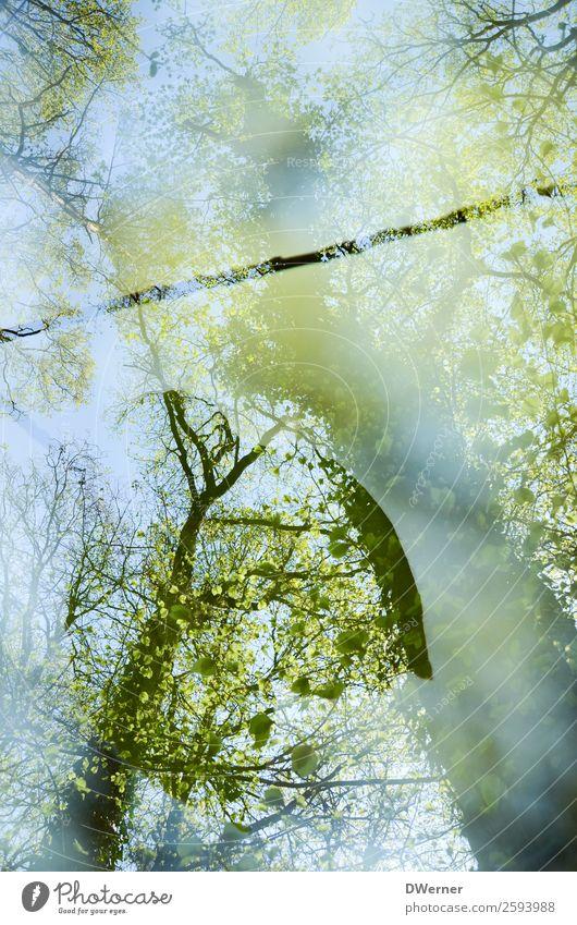 doppel 4 (*500*) Himmel Natur Ferien & Urlaub & Reisen Sommer blau Pflanze grün Landschaft Baum Wald Umwelt fliegen Ausflug Zufriedenheit träumen Wachstum