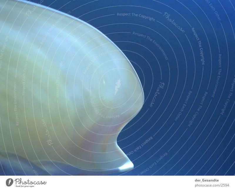muschelform Natur blau Lampe durchsichtig Muschel Nahaufnahme Makroaufnahme