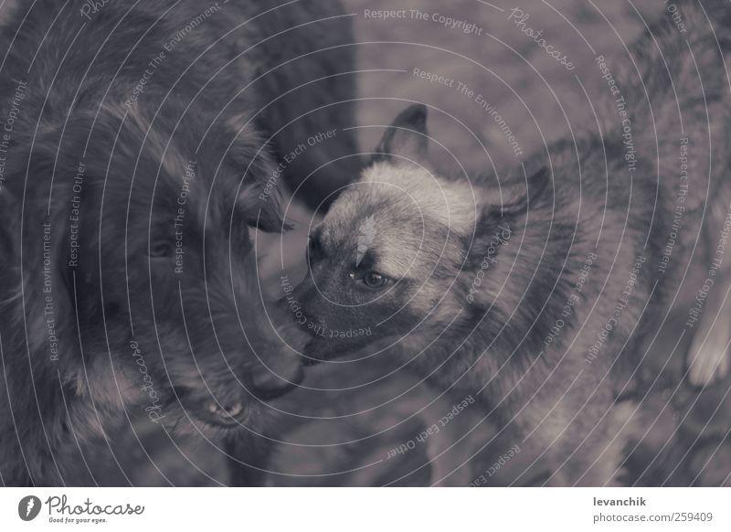 Hund Tier Liebe Leben Gefühle Zusammensein Wildtier Tiergesicht Zoo Haustier Umarmen