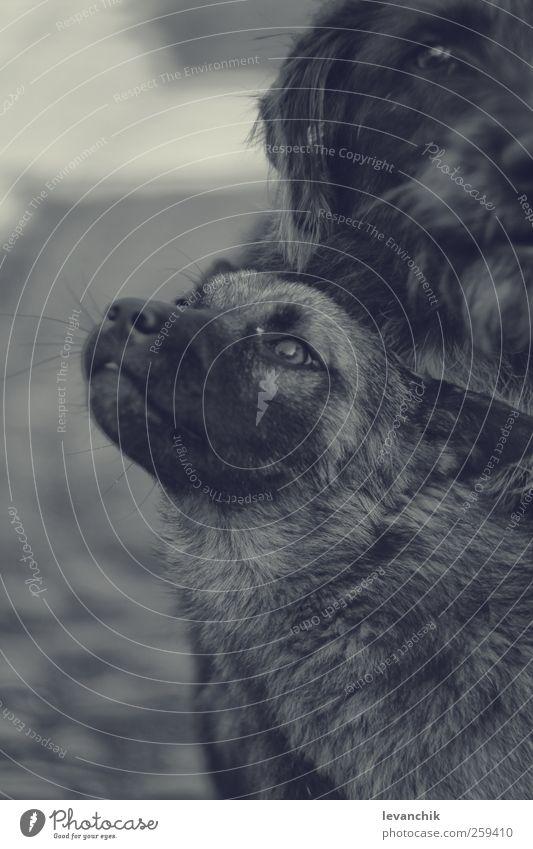 Hund Tier Liebe Wildtier Tiergesicht Haustier Nutztier Tierliebe
