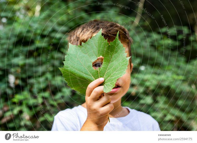 Kleiner Junge, der durch ein Loch in einem Blatt schaut. Lifestyle Freude Glück schön Spielen Ferien & Urlaub & Reisen Abenteuer Kind Schule Mensch Kleinkind