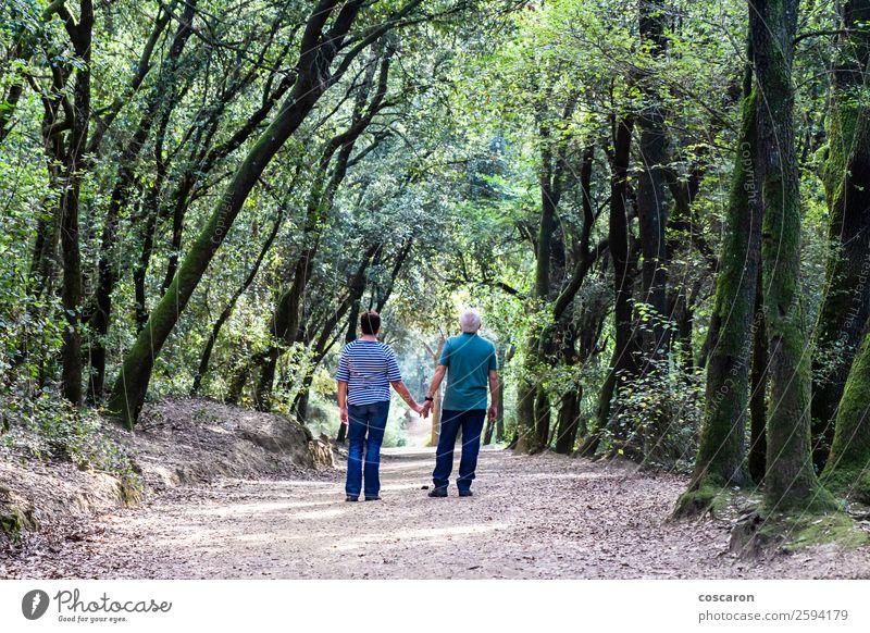 Rentnerpaar, das gemeinsam auf dem Weg eines Waldes geht. Lifestyle Glück schön Gesundheit Ferne Ruhestand Mensch maskulin feminin Frau Erwachsene Mann