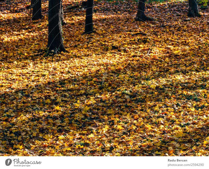 Braun getrockneter Herbst Blätter Hintergrund in der Herbstsaison abstrakt Kulisse Hintergrundbild schön hell braun Nahaufnahme Farbe mehrfarbig regenarm