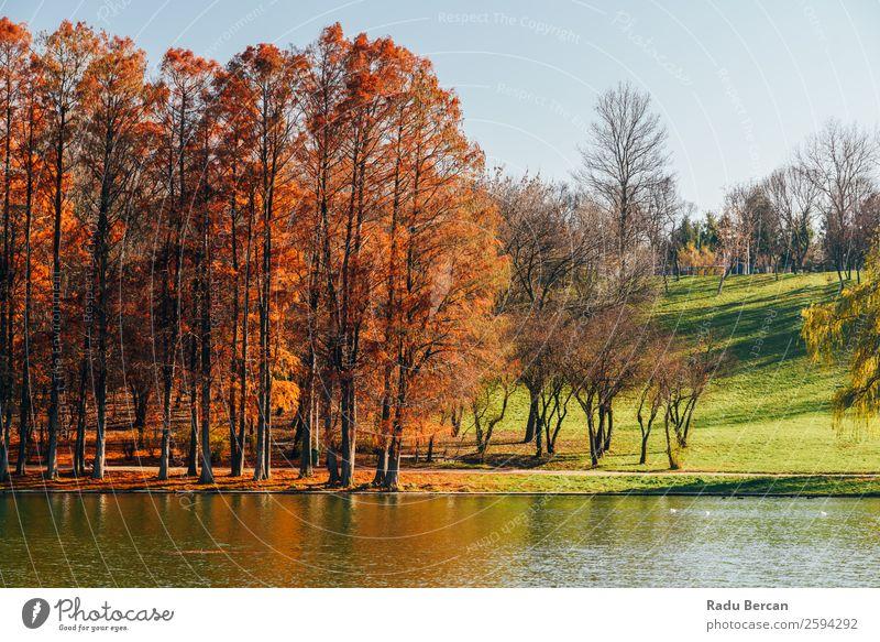 Herbstbäume Landschaft des Tineretului Parks in Bukarest, Rumänien In der Herbstsaison gelb Fluss Wasser Reflexion & Spiegelung Natur See alpin grün Himmel