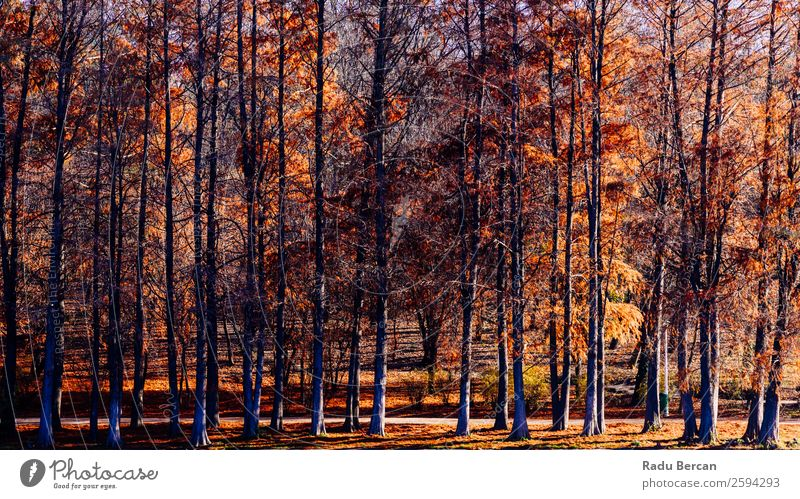 Natur alt Pflanze Farbe schön Landschaft rot Sonne Baum Blatt Wald Herbst gelb Umwelt natürlich Freiheit