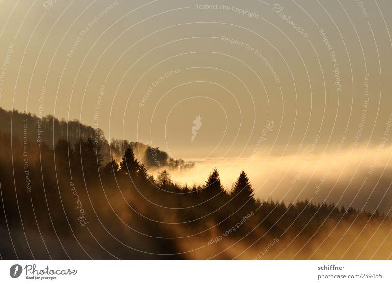 Watterausch I Natur Landschaft Pflanze Himmel Wolken Horizont Sonnenlicht Winter Klima Schönes Wetter Nebel Baum Wald Hügel Berge u. Gebirge Unendlichkeit gelb