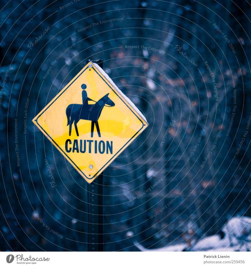 Caution blau Ferien & Urlaub & Reisen Wald gelb Umwelt Stimmung Freizeit & Hobby Schilder & Markierungen wandern Ausflug Abenteuer Tourismus Lifestyle