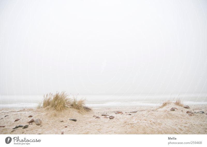 Wohin du willst Umwelt Natur Landschaft Sand Himmel Nebel Gras Küste Strand Nordsee Meer Stranddüne Strandanlage Unendlichkeit hell natürlich trist grau
