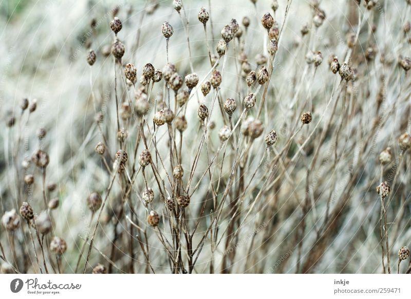 Trockenblumen Natur schön Pflanze Winter Blume Herbst Umwelt Wiese Gras Garten Stimmung Park Wetter braun wild Wachstum