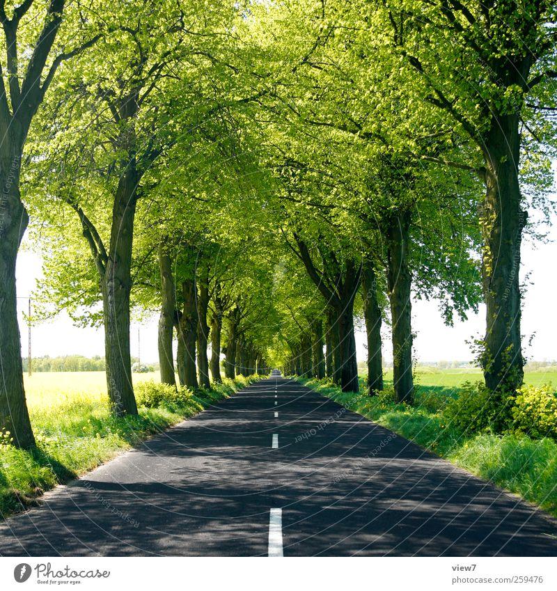 Sonnenallee Umwelt Natur Landschaft Sommer Klima Schönes Wetter Pflanze Baum Verkehr Verkehrswege Autofahren Wege & Pfade Verkehrszeichen Linie Streifen