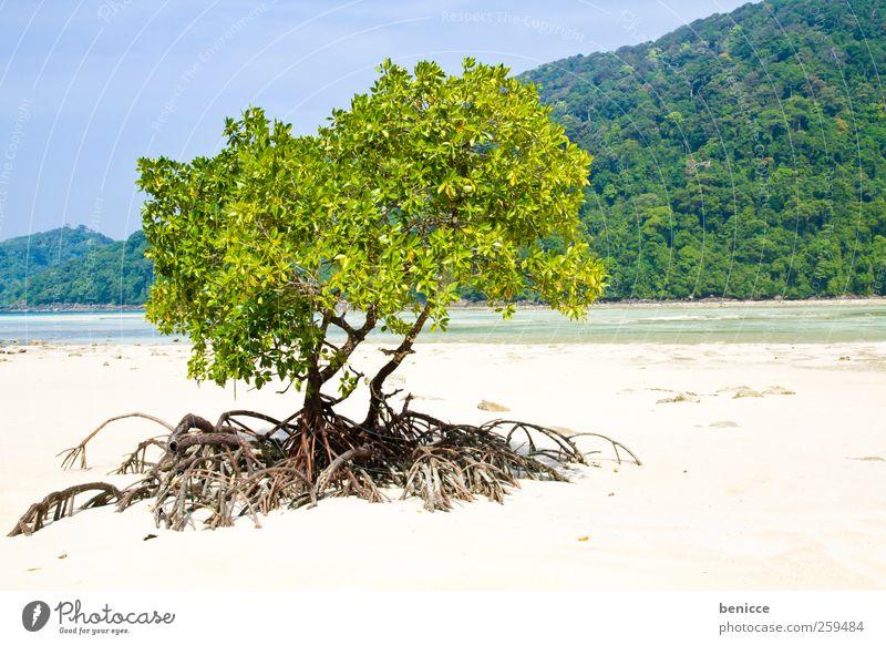 mangrove Natur Baum Pflanze Ferien & Urlaub & Reisen Sonne Meer Strand Reisefotografie Symbole & Metaphern Asien Thailand Wurzel Sandstrand Traumstrand Mangrove