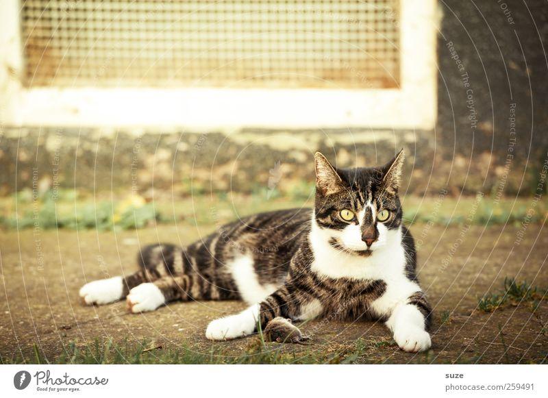 Tom & Jerry* Katze Tier Tod sitzen warten fangen Jagd Maus Haustier Hauskatze Maul Beute Katzenfutter