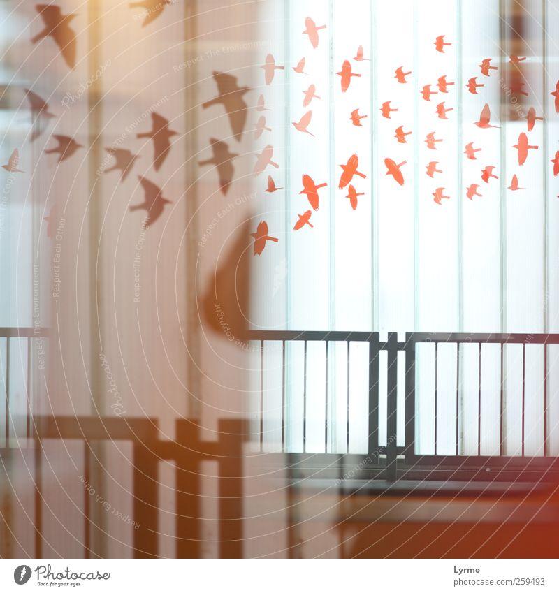 Zugvögel Stadt Fenster Architektur Bewegung träumen Vogel Fassade Verkehr fahren U-Bahn bizarr Bahnhof Fernweh Bahnsteig S-Bahn Bahnfahren