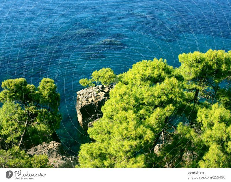 Blick von oben aufs Meer und pinienbäume in Griechenland Ferien & Urlaub & Reisen Tourismus Sommer Sommerurlaub blau grün Wasser Felsen Vogelperspektive ruhig