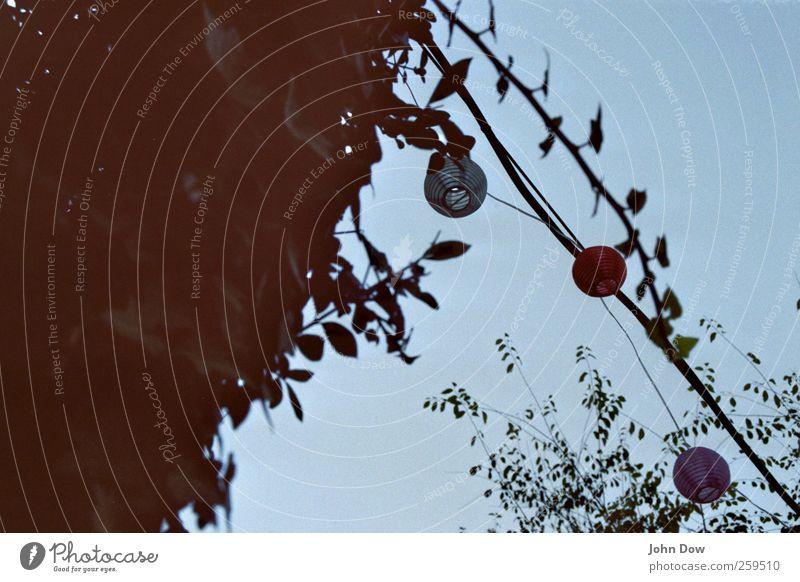 /\ Ferien & Urlaub & Reisen Sommer Baum Frühling Lampe leuchten Dekoration & Verzierung Sträucher Wolkenloser Himmel Lampion festlich Dreieck Lichterkette Sommerabend Sommerfest Partynacht