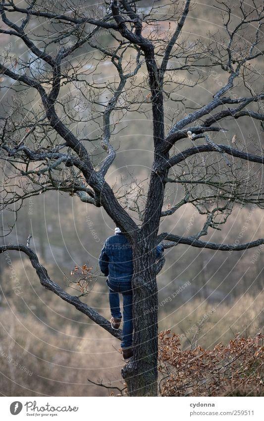 Die Welt von oben Mensch Natur Jugendliche Baum Winter Einsamkeit ruhig Erwachsene Ferne Wald Erholung Umwelt Leben Landschaft Freiheit Stil