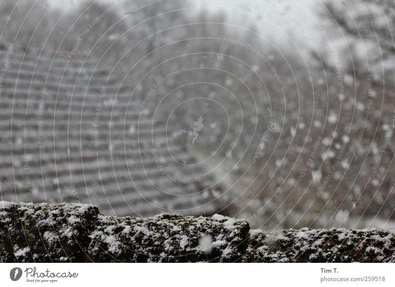 Pommern Landschaft Winter Wetter Schnee Schneefall Polen Dorf Menschenleer Haus Bauwerk Gebäude Dach Farbfoto Außenaufnahme Tag