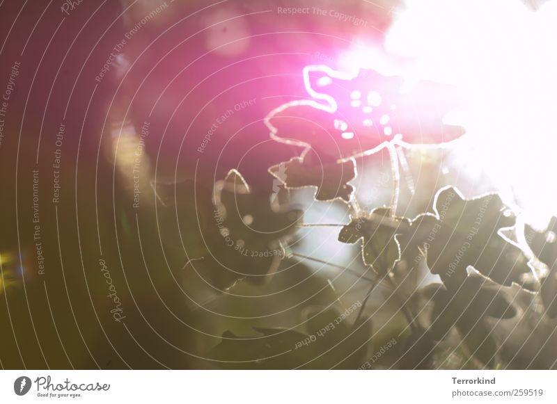 Chamansülz 2011 | reflections Natur weiß grün Baum Blatt Garten hell rosa grell Licht