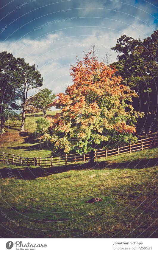 bunter Baum im Herbst Umwelt Natur Landschaft Schönes Wetter Pflanze Park Wiese blau braun mehrfarbig grün Großbritannien Zaun Weide Herbstlaub Herbstfärbung