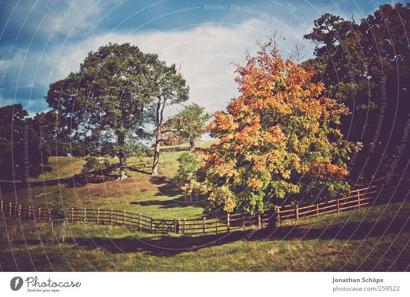 bunter Baum im Herbst +mehr Bäume Umwelt Natur Landschaft Himmel Pflanze Gras Park Wiese Hügel Glück Weide Zaun Herbstfärbung Herbstlaub Herbstlandschaft
