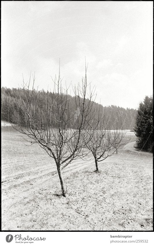 display generic winterly image here Umwelt Natur Landschaft Pflanze Winter Eis Frost Schnee Baum weiß kalt Ast analog Schwarzweißfoto Außenaufnahme Menschenleer