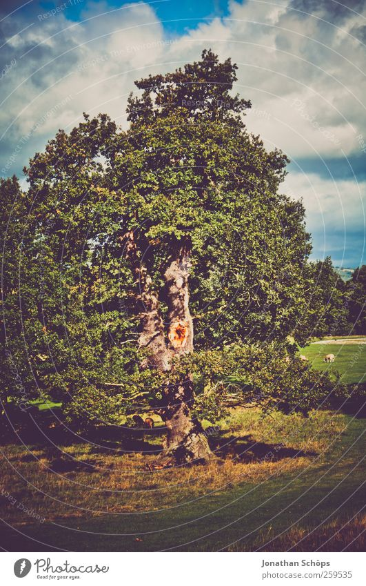 anderer Baum Himmel Natur blau alt grün Sommer Blatt Wolken Umwelt Landschaft Wiese Herbst Freiheit Park Feld