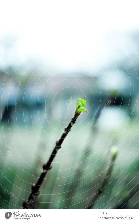 Frühlingsboten Himmel Natur grün schön Pflanze Winter Blatt Herbst kalt Umwelt Gefühle Garten Stimmung Park Wetter Klima