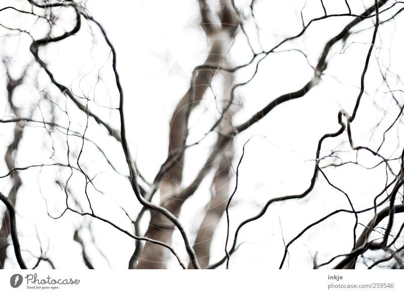 schauder Umwelt Natur Pflanze Luft Himmel Herbst Winter Klima Wetter Nebel Baum Zweige u. Äste Ast Korkenzieher-Weide Garten Park außergewöhnlich gruselig lang